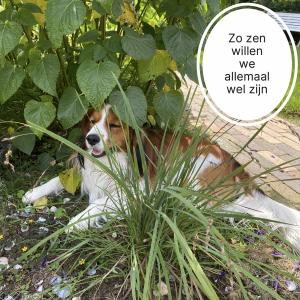 Zo zen willen we allemaal wel zijn. Hond ontspannen onder een plant.
