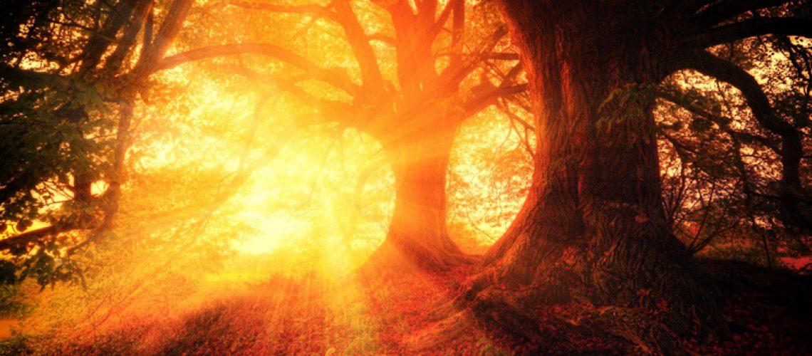 Bomen met daarachter fel licht, symbool voor spiritualiteit waarbij je in je eigen kracht komt te staan
